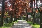 Červené javory ve Frágnerově ulici v Nespekách.