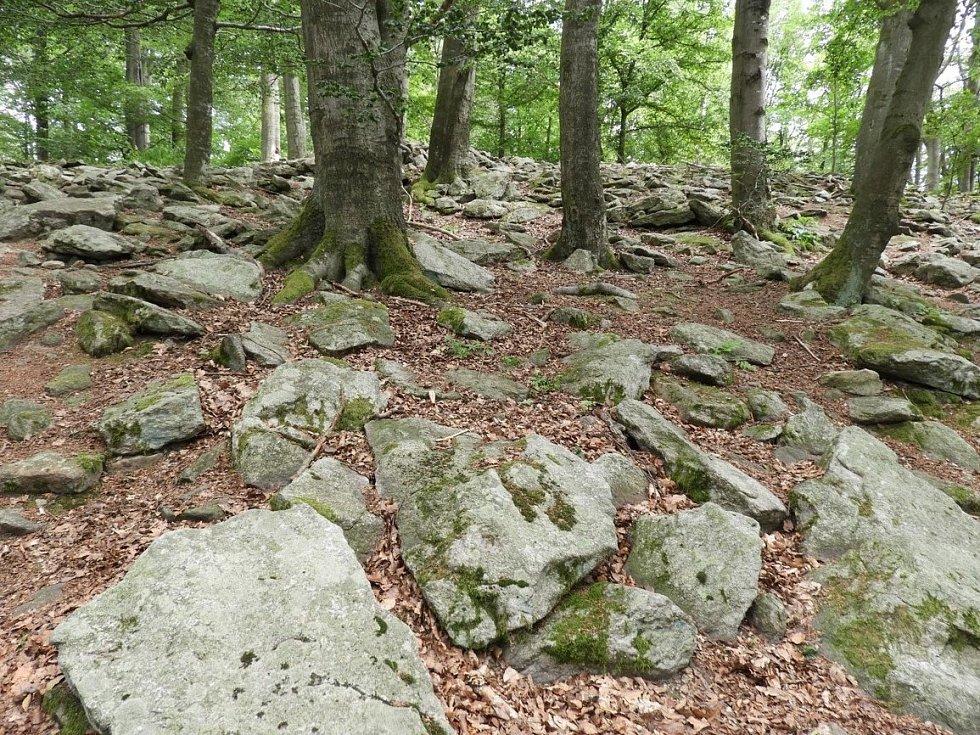 Příroda na vrchu Velký Blaník.
