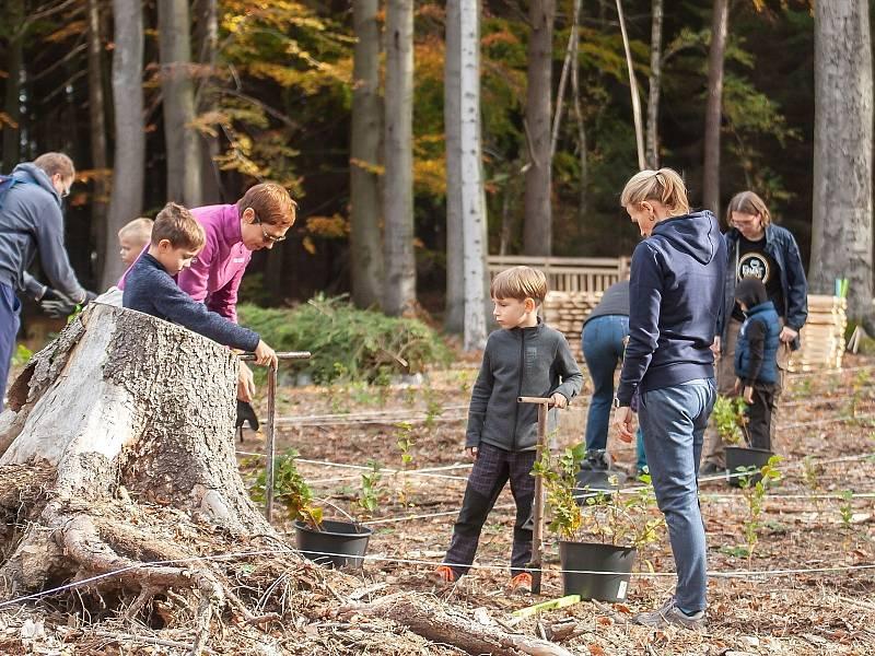 Den za obnovu lesa.