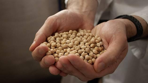Cizrnu označili vědci Mendelovy univerzity v Brně za potravinu budoucnosti.