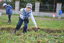 Po stopách divočáka aneb setkání dětí ze školky MiniSvět v Mrači s divokým prasetem.