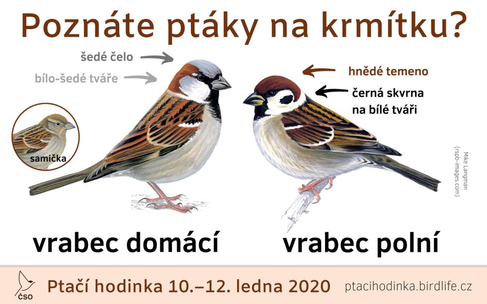 Pomocí jednoduchých výukových materiálů se účastníci programu naučí určovat a rozlišovat nejběžnější ptačí druhy na krmítku, například vrabce domácího od polního.
