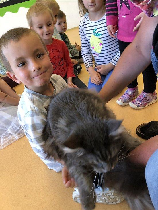 Mohutný kocour Tristan uchvátil děti v Mateřské škole MiniSvět v Mrači.