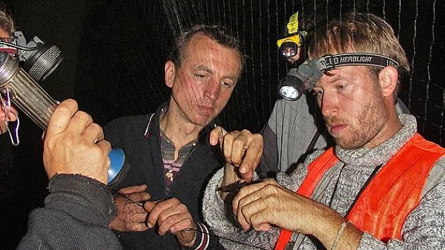 Ochránci netopýrů je při kontrole zdravotního stavu chytají do sítí.