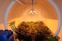 Řízená pěstírna marihuany u Žabovřesk.