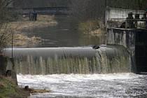 Vytrvalý déšť zvedá hladiny toků i na Benešovsku, na snímku je Janovický potok v ústí do Sázavy.. .
