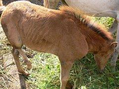 S týráním zvířat se veterináři setkávají často.