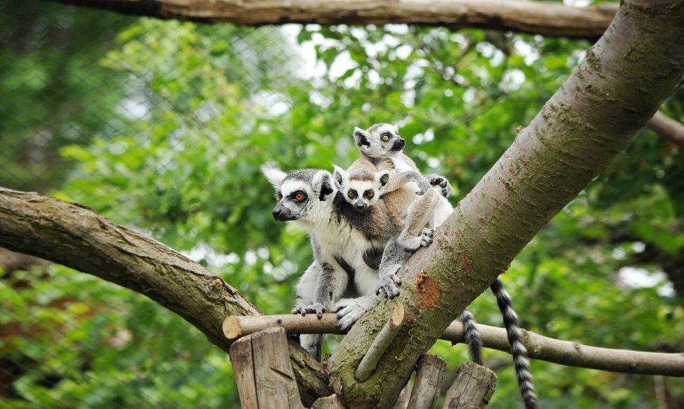 Zoopark Zájezd.