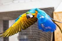 Papoušek - ilustrační foto