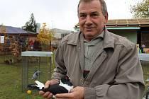 Celoživotním koníčkem Josefa Haška z Petroupimi je chov holubů domácích.