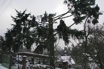 Zohyzděný strom působí tesklivě