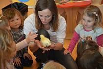 Dětem se snaží školka MiniSvět každý týden do školky přinést skutečné živé zvíře.