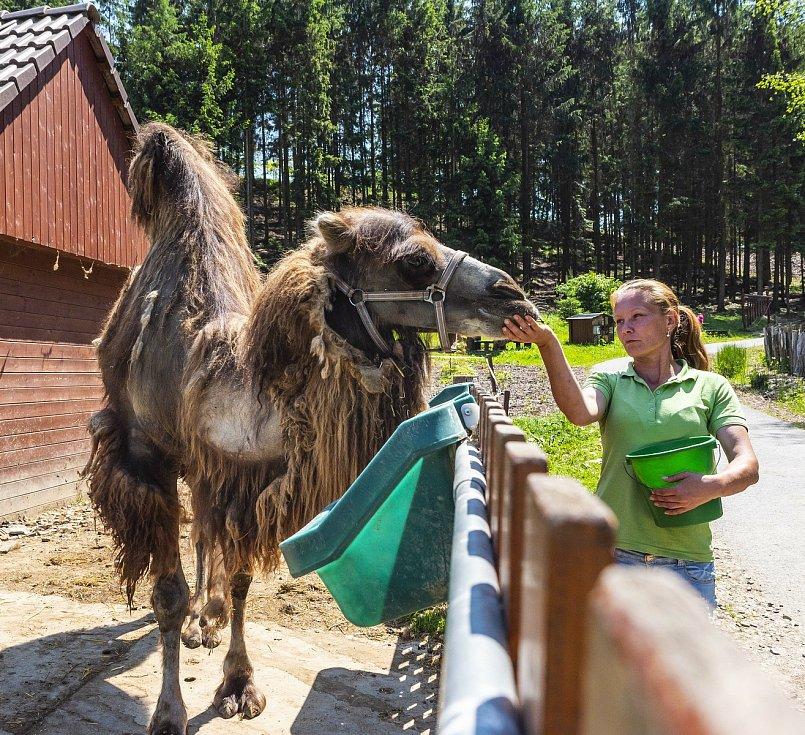 Farmapark Soběhrdy nabízí přímý kontakt se zvířátky i různorodé atrakce.