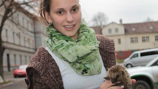 Malý ježek přežije zimu ve vlašimské záchranné stanici pro zvířata.