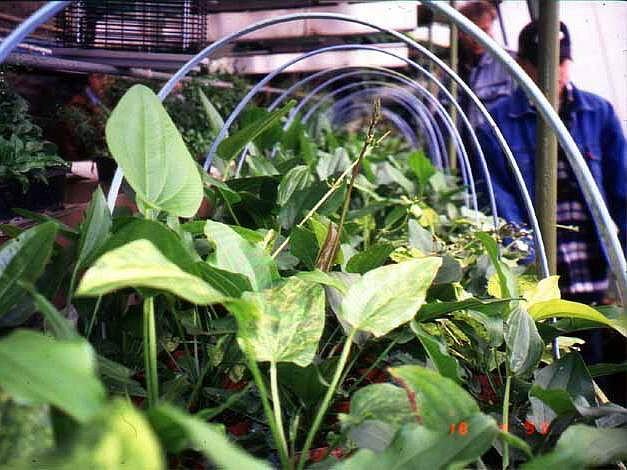 Pěstírna konopí se z dálky může jevit jako obyčejný, byť udržovaný skleník