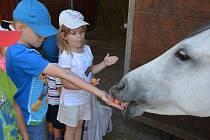 Děti z Mateřské školy MiniSvět v Mrači na exkurzi na koňské farmě v Zahořanech.