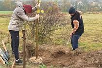 Okrouhličtí sázejí Alej živých, ve které bude mít každý obyvatel symbolicky vlastní strom.