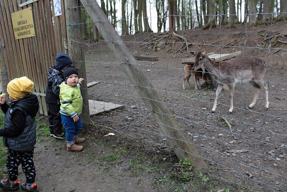 Z obůrky pro lesní zvěř v zámeckém parku na Konopišti.
