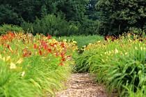 Průhonická botanická zahrada.
