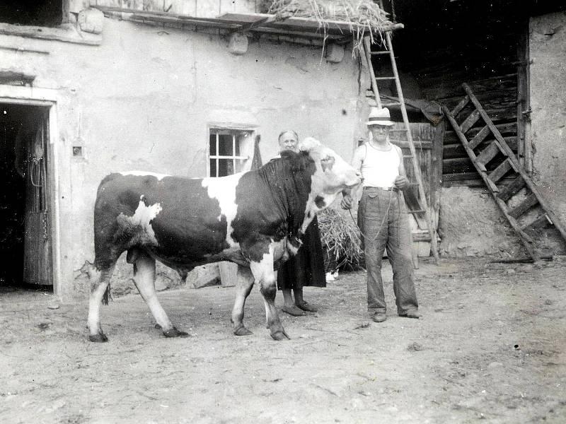 Snímek chlouby hospodářství rodiny Kopeckých v jejich dvoře v Petroupimi, kolem roku 1940.
