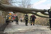 Spadlý strom na silnici mezi Smilkovem a Kouty.