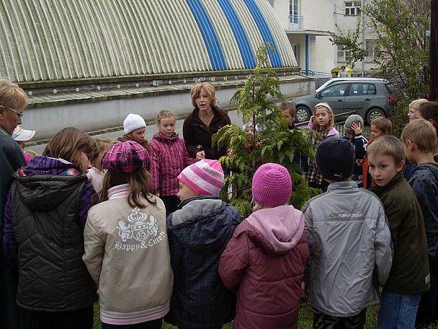 Děti ze ZŠ Jiráskova si před školní družinu vysadily túji.