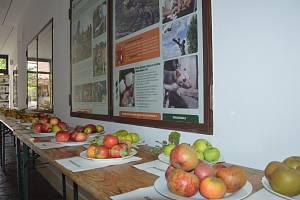 Výstava starých odrůd ovoce v podblanickém ekocentru