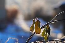Poslední skutečně mrazivý den letošní zimy, kdy bylo nějakých -18°C, zvěčnila naše čtenářka Káča Skalská.