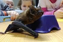 Za netopýrem černým se zájemci vypraví do útrob tělesa sypané přehradní hráze.