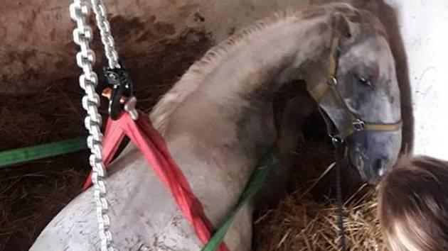 Koně se přes veškeré úsilí nepodařilo zachránit.