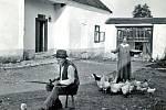 Zvířat si lidé z vesnic vážili. Dokládá to také péče o slípky ze strany Karla a Kateřiny Kopeckých z Peroupimi. Fotka v jejich dvoře vznikla kolem roku 1930.