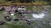 Řeka v Týnci nad Sázavou v úterý 11. září ráno.