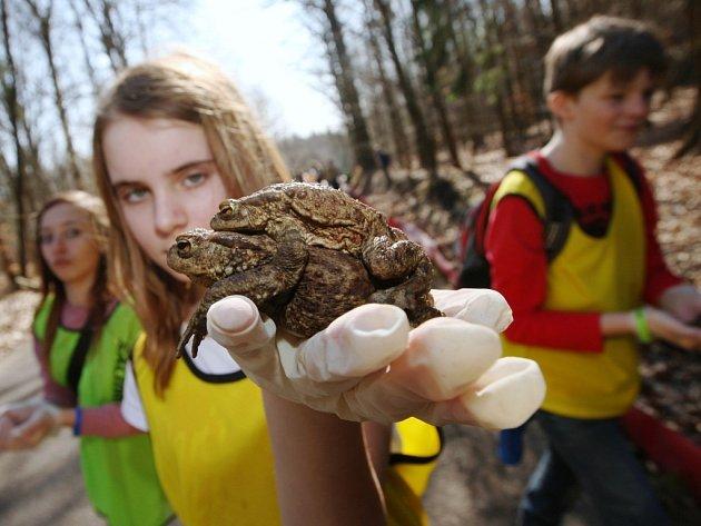 Cestování žab zpomalilo chladné počasí.