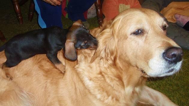 Fenka Annie se stala vítězkou v kategorii psů.