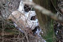 Mrtvý pes v lese u Jinošic.
