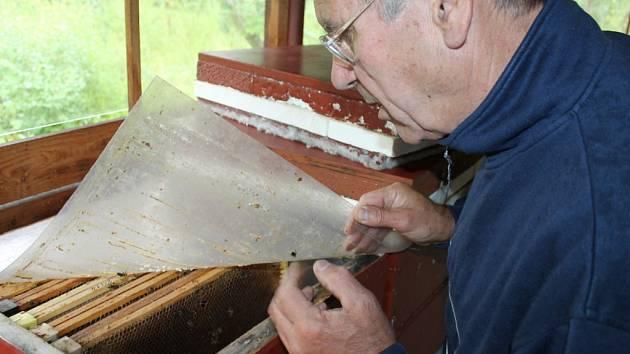 Mor včel trápí na Vlašimsku nejednoho včelaře.