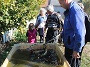 Výlov jednoho ze dvou rybníků patřících SDH Božkovice.