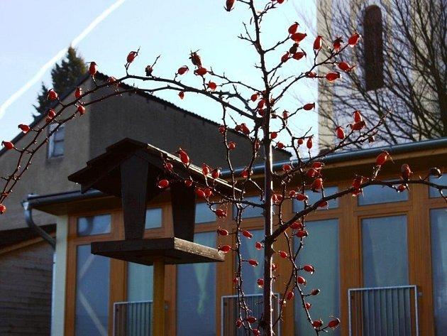 Letošní zima připomíná spíš jaro.