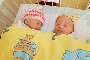 Lívia a Martin Rychtaříkovi jsou od 7. března rodiče dvojčátek. Dcera Laura (žlutá čepička) se narodila ve 2.01 a měla 2690 gramů a 46 centimetrů. Sofie (růžová čepička) se narodila ve 2.03 s váhou 2460 gramů. Doma v Říčanech čeká bratr Sebastian (4).