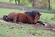 Koně z jankovské kauzy jsou v nesrovnatelně lepším stavu než před rokem.
