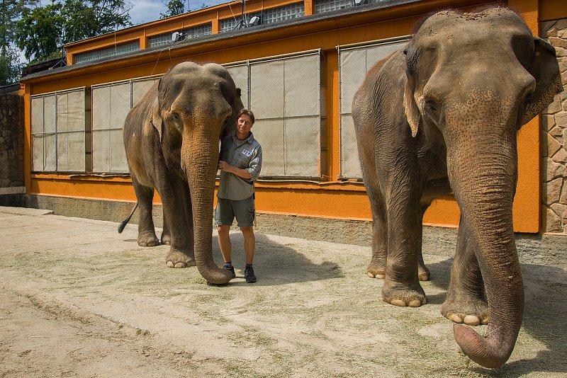 Samice slona indického Bala (vlevo) a Rání sošetřovatelem Václavem Aschenbrennerem vLiberecké zoologické zahradě na snímku z17. července.