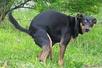 Venčení psů na trávníku