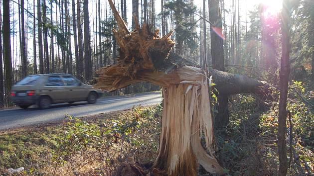 Silný vítr lámal stromy.