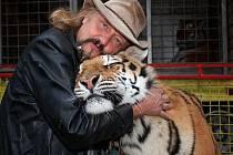 Největšími miláčky principála Jaromíra Joo jsou šelmy. Kotě americké pumy Kiara a sibiřský tygr Borneo.