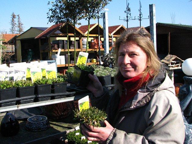 Zahradnice Věra Fulínová při přípravě trvalek k prodeji.