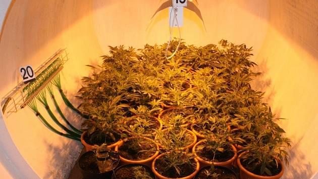 Řízená pěstírna marihuany v Žabovřeskách u Benešova.
