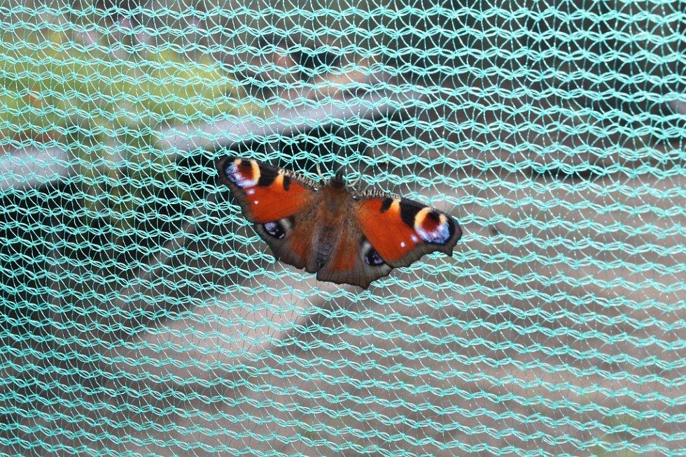 Motýlárium v Ochraně fauny Votice.