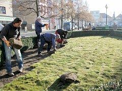 Pokládání trávníku na Masarykově náměstí.