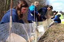 Život žab zachraňující opatření staví u Trhového Štěpánova nejen  pracovníci ČSOP, ale pomáhají jim i studenti