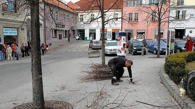 Prořezávání lip na Masarykově náměstí v Benešově.